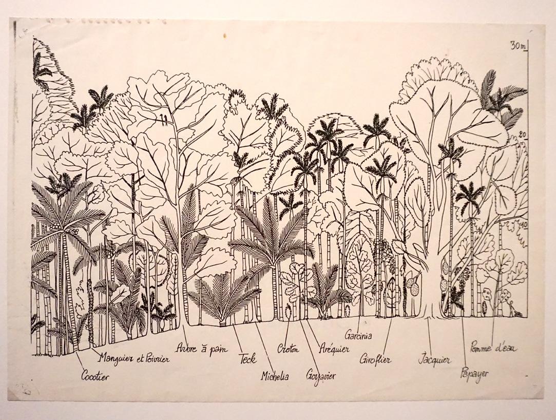 Exposition_Nous-les-arbres_Fondation-Cartier-pour-l-Art-Contemporain_Blog-Juillet-2019_10
