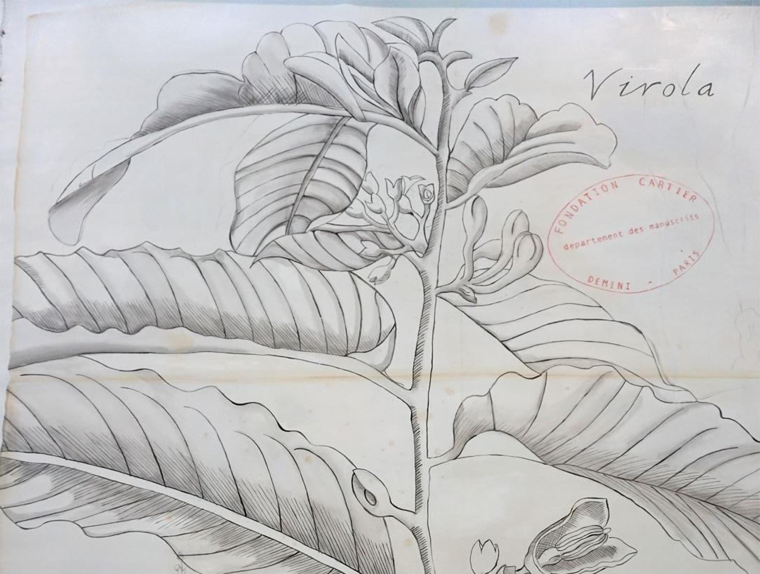 Exposition_Nous-les-arbres_Fondation-Cartier-pour-l-Art-Contemporain_Blog-Juillet-2019_4